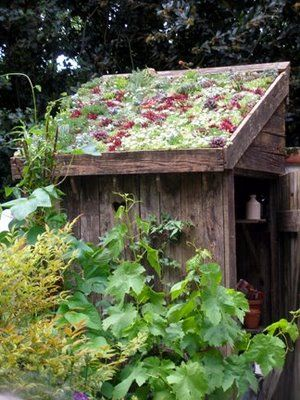 old shed with succulent roof.   Do not have an old shed but do have a dog house roof this might work on. Can't wait to get started.