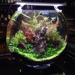 17 Best Images About Vase Aquarium On Pinterest Trees