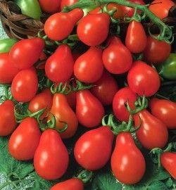 Graines de Tomate Poire rouge NT - Semences non traitées