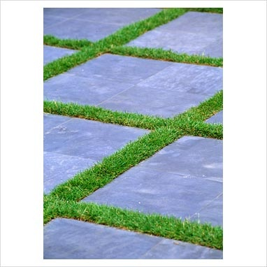 GAP Photos - Garden & Plant Picture Library - Slate pavers with grass between - GAP Photos - Specialising in horticultural photography