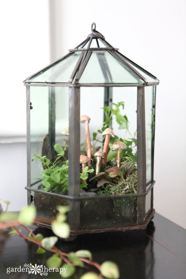 Have An Overgrown Or Dying Terrarium Get Creative With A Makeover
