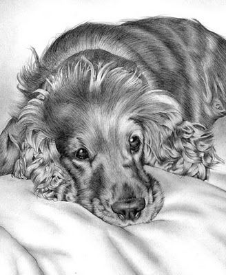 dog drawing beautiful pencil art