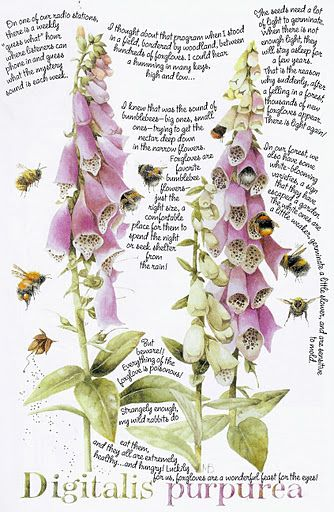 Marjolein Bastin - foxgloves & bumblebees
