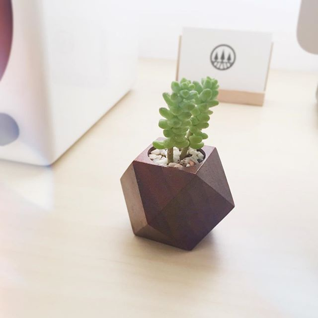 Little things are the ones that make your day brighter and happier #succulent #succulents #plant #planter #etsy #vscocam #tomonijp #northernsdesign #afterlight #hokkaido #asahikawa #preserveartisans #handmade #design #office #interior #green #多肉植物 #インテリア #オフィス #happier #brighter