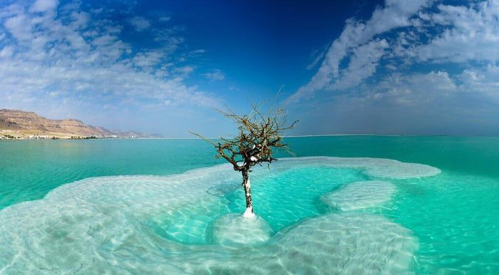 Single Tree In The Middle Of The Dead Sea Dead Sea Photo Vacation Places