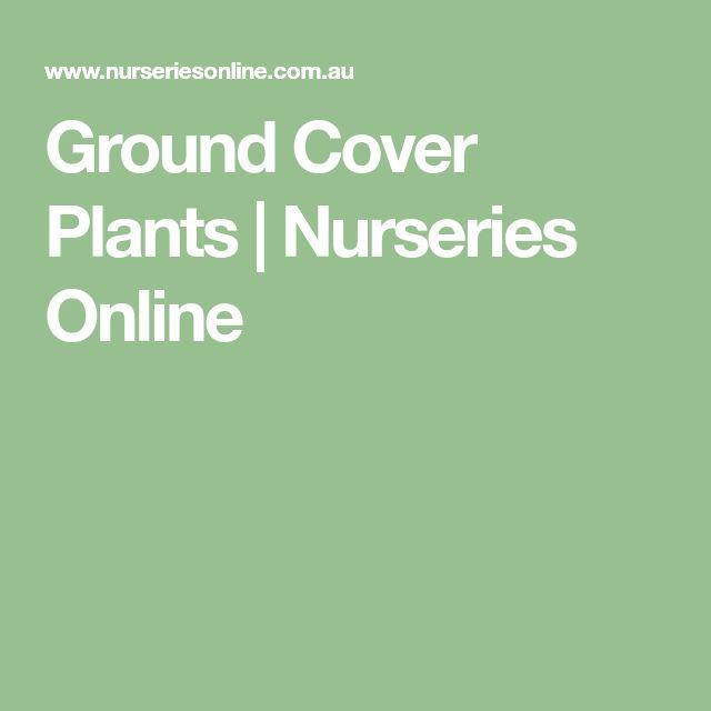 Ground Cover Plants | Nurseries Online