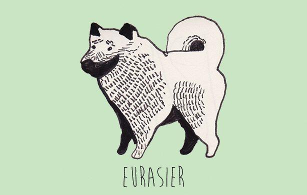 E for Eurasier