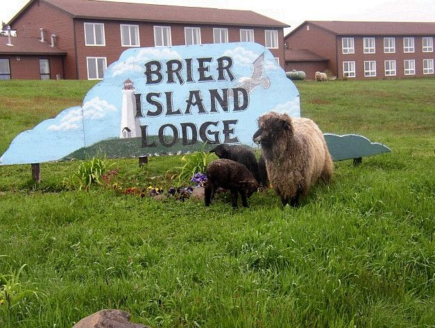 The sheep better be part of the deal! - Brier Island Lodge, Nova Scotia