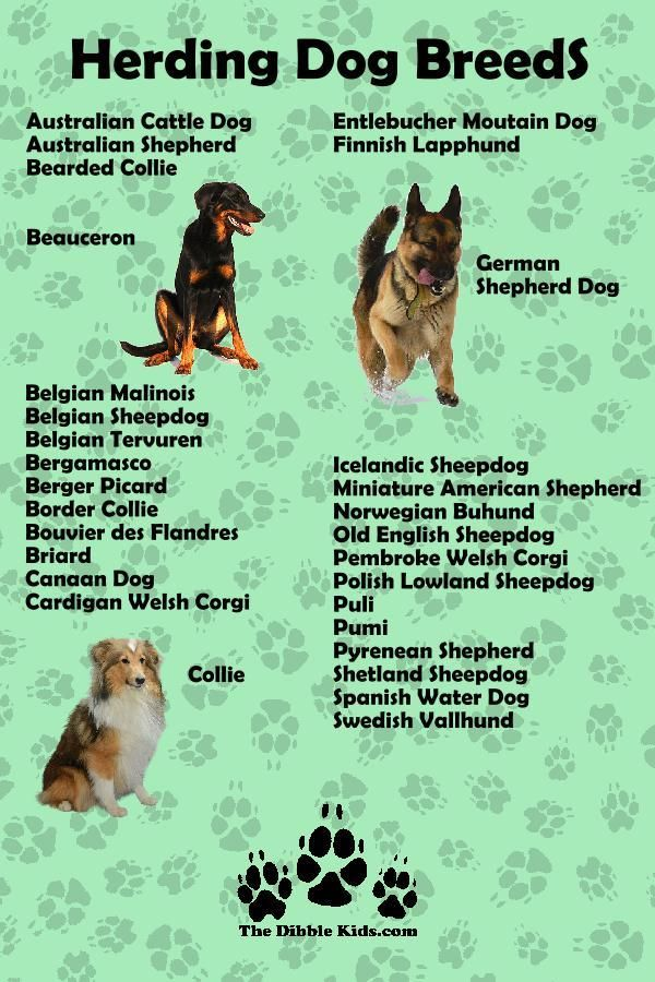 7 Dog Breed Groups Characteristics Of Each Herding Dogs Dog