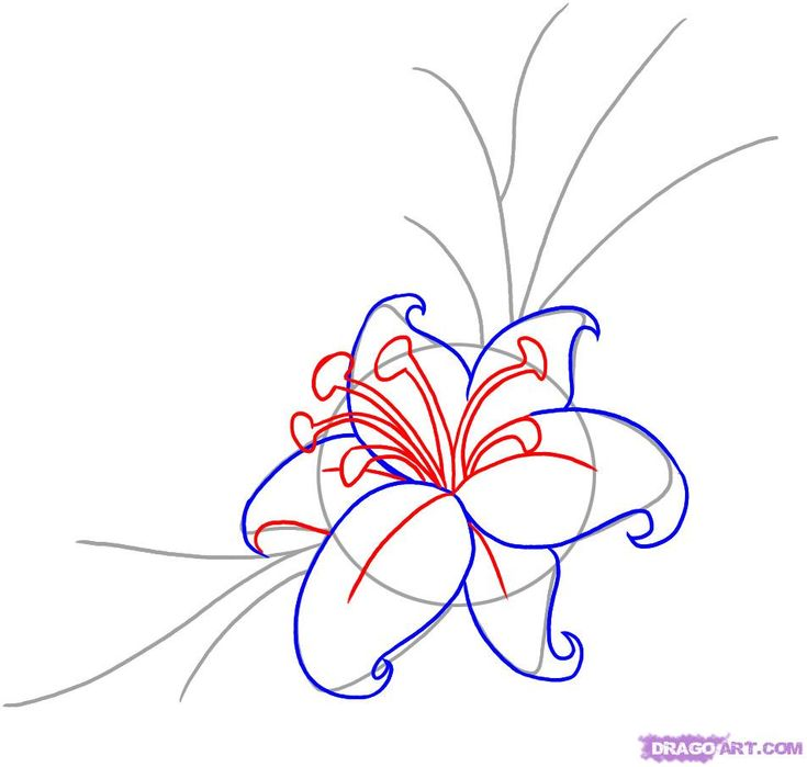 23 best flowers images on Pinterest Flowers Drawing and How to draw