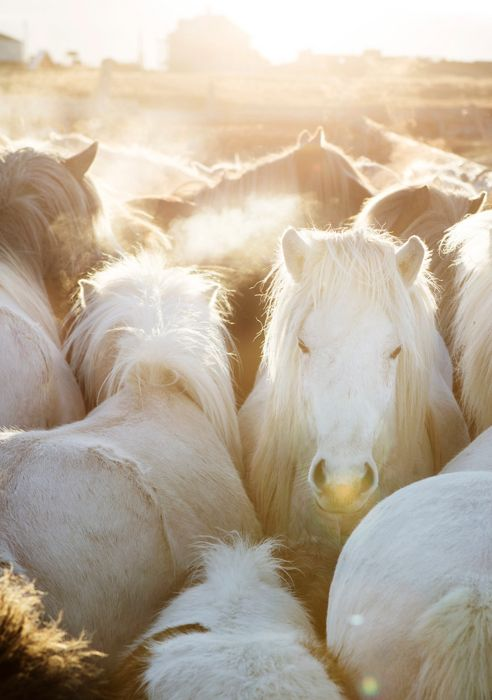 Horses. Just give them unicorn horns and my life will be complete.