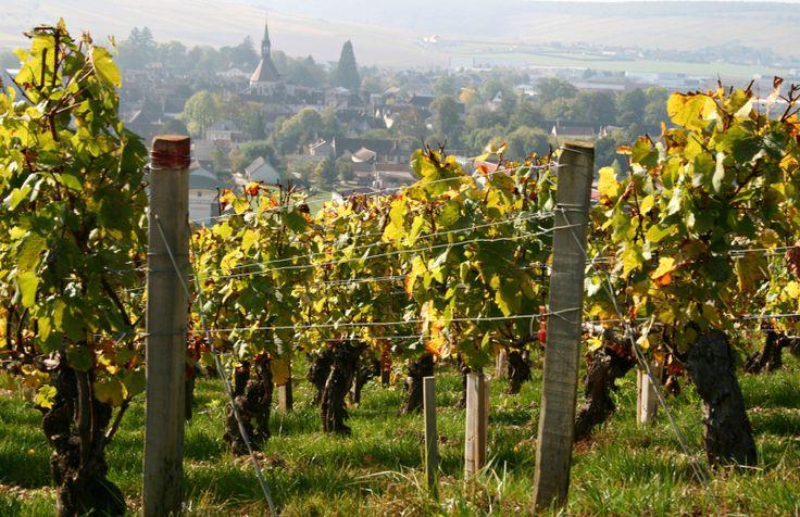 Nichéau fond d'un vallon qui se termine sur la rive droite de l'Yonne, à 15km en amont d'Auxerre, Irancy est un pittoresque village vigneron. L'irancy est un vin rouge robuste, riche en tanins, i...