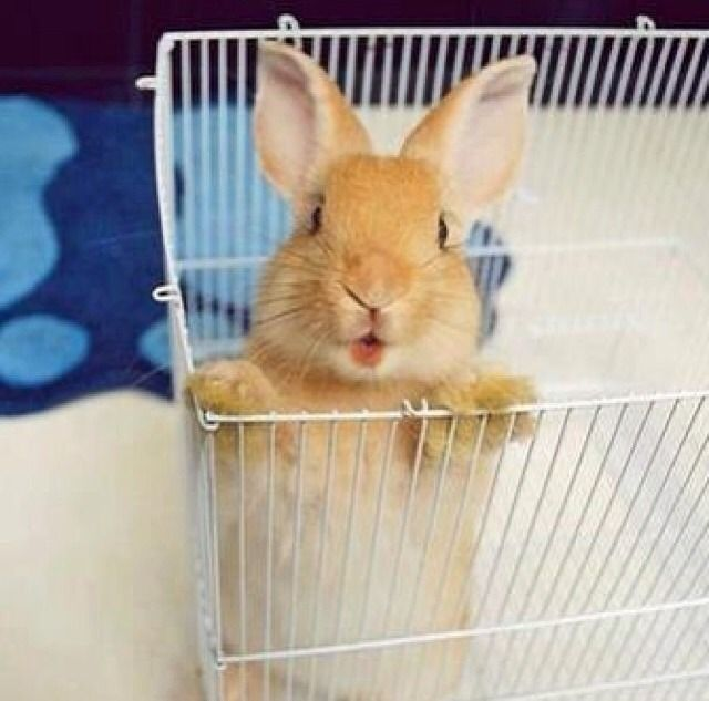 Can I come out now?