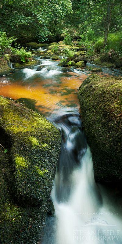 La Mare aux Fees - The Druid Forest by artwork-pictures.deviantart.com