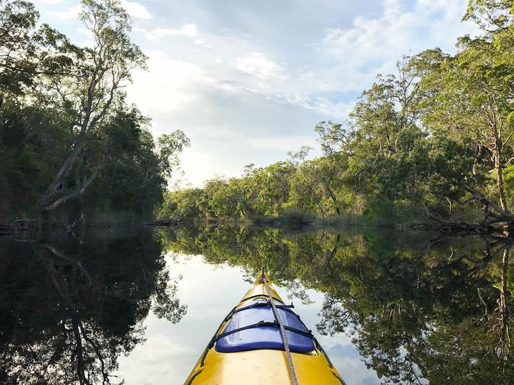 Kayaking the Noosa Everglades
