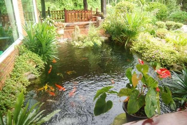 Feng Shui Backyard Pond :  my dream koi fish pond on Pinterest  Gardens, Home and Backyard ponds