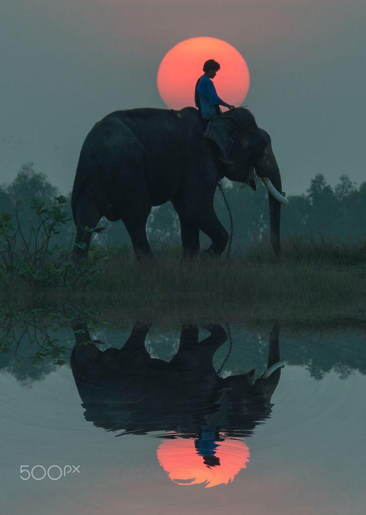 Mahout and his elephant at Ta Klang Elephant Village, Surin, Thailand by Preeda Prakotmak