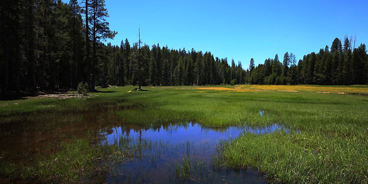 California Cabin Rentals,Yosemite area lodging, weekends getaways, pet friendly…