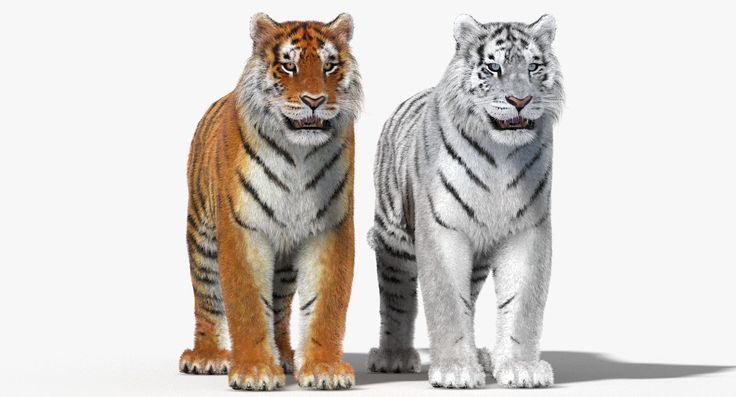 Tiger Fur Color 3D 3Ds - 3D Model