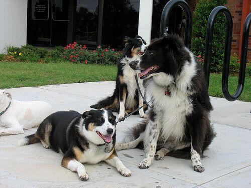 Se volete dare e ricevere felicità assoluta nella vostra vita, c'è solo una cosa da fare: adottare un cane.
