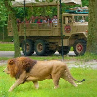 Safari Off Road Adventure Lion Six Flags Great Adventure You Can Also Drive Your Own Vehicle But The Pa  E2 9d A4 Ef B8 8fmy Favorite Places E2 9d A4 That Ive Been To