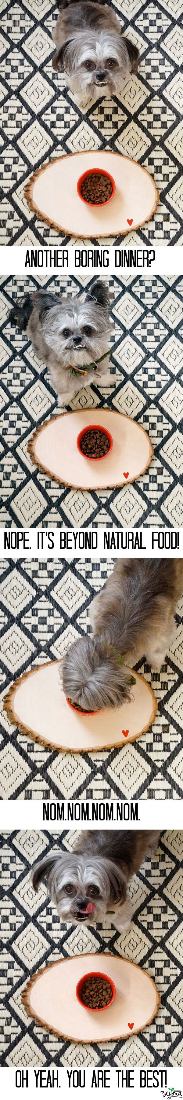 Learn more about Beyond Natural Pet Food by clicking through! Miles loves it!!  #thinkbeyond