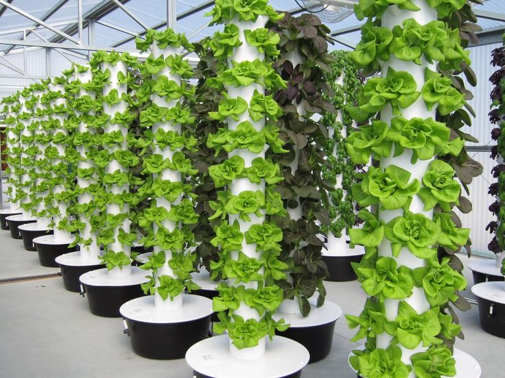 753 best Tower Gardens! (By Juice Plus) images on Pinterest   Tower ...