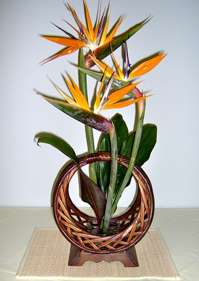 How To Make Flower Arrangements 154 best birds paradise arrangements images on pinterest | flower
