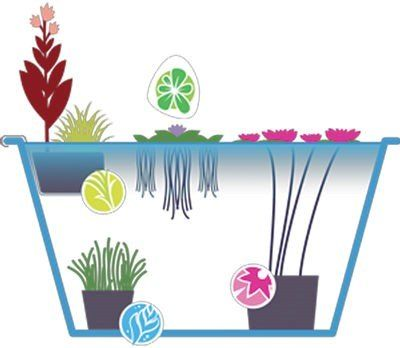 How to create a water garden in a container!                                                                                                                                                      More