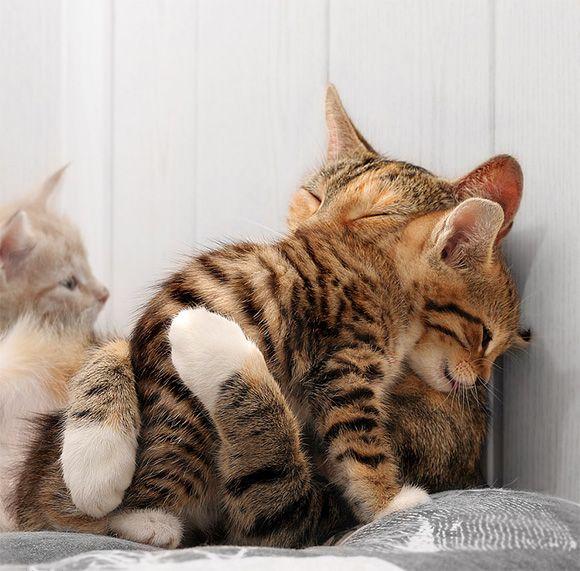 Kitten Gets Hug From Mom!