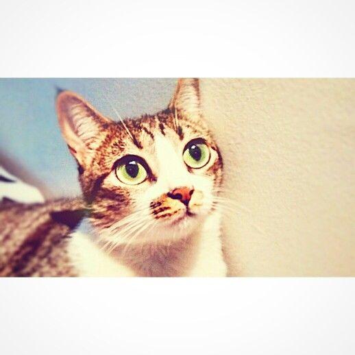 Brigitte olhos verdes - green eyes