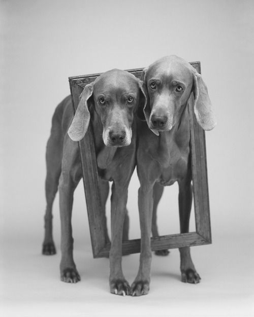 maboroshitira:   William Wegman