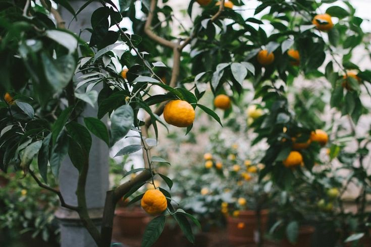 Tangerine Tree Photography