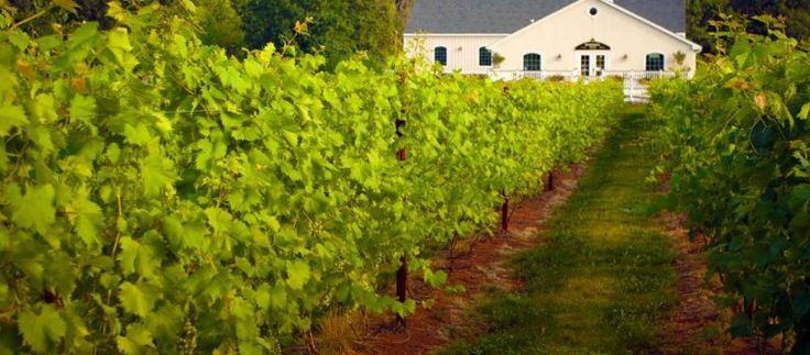 Local Wineries with a Jersey Fresh Flair | Jersey Bites