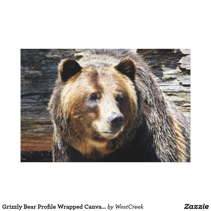 Grizzly Bear Profile Wrapped Canvas Print