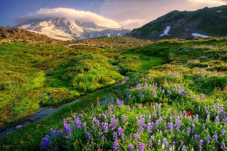 Bello paraíso. Monte Rainier (by Ryan Buchanan)