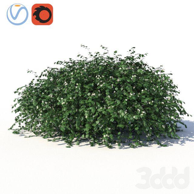 Чубушник (жасмин) с лежащими на земле ветками и листьями ...