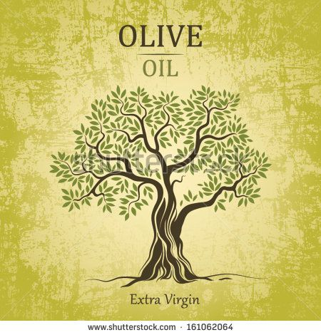 Olive tree on vintage paper. Olive oil. Vector  olive tree. For labels, pack. - stock vector
