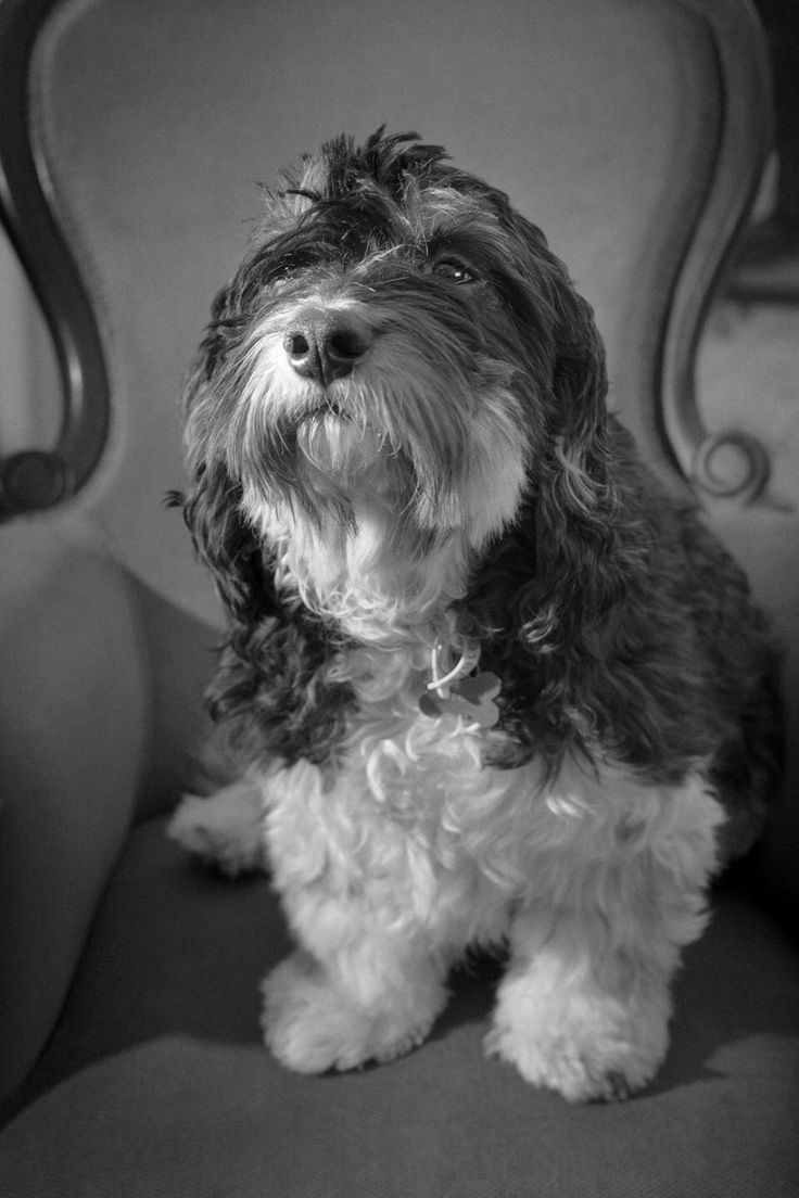 Press Paws Pet Photography www.presspawsphotos.com