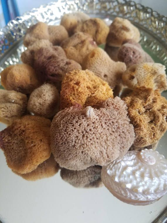 Unprocessed Raw Small Sea Sponges Natural Bath Beauty Artist