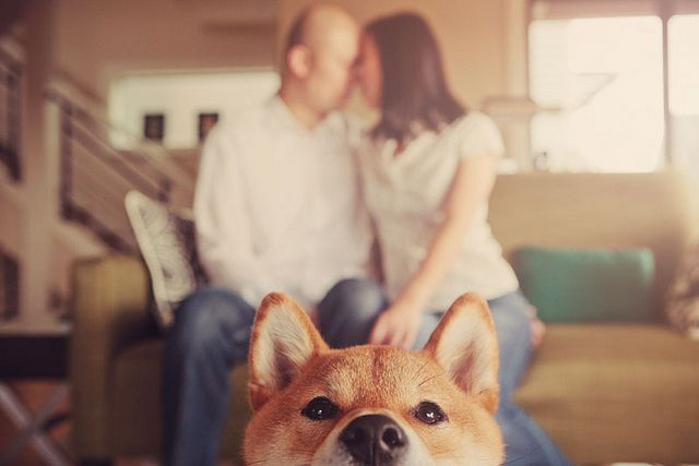 By Yvonne Wong #shiba #dog #engagement photo
