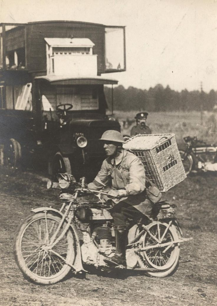 British soldier delivering pigeons to trenches of the Western Front, c.1916