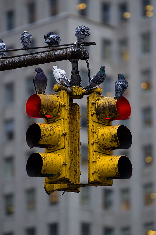 Every detail seemed etched in his brain in perfect detail - even the muddied stop light, complete with half a dozen bedraggled pigeons.