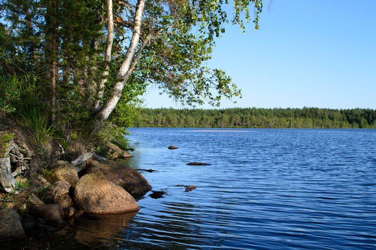 Kuhankuono at Kurjenrahka Nationalpark near Turku Western Finland