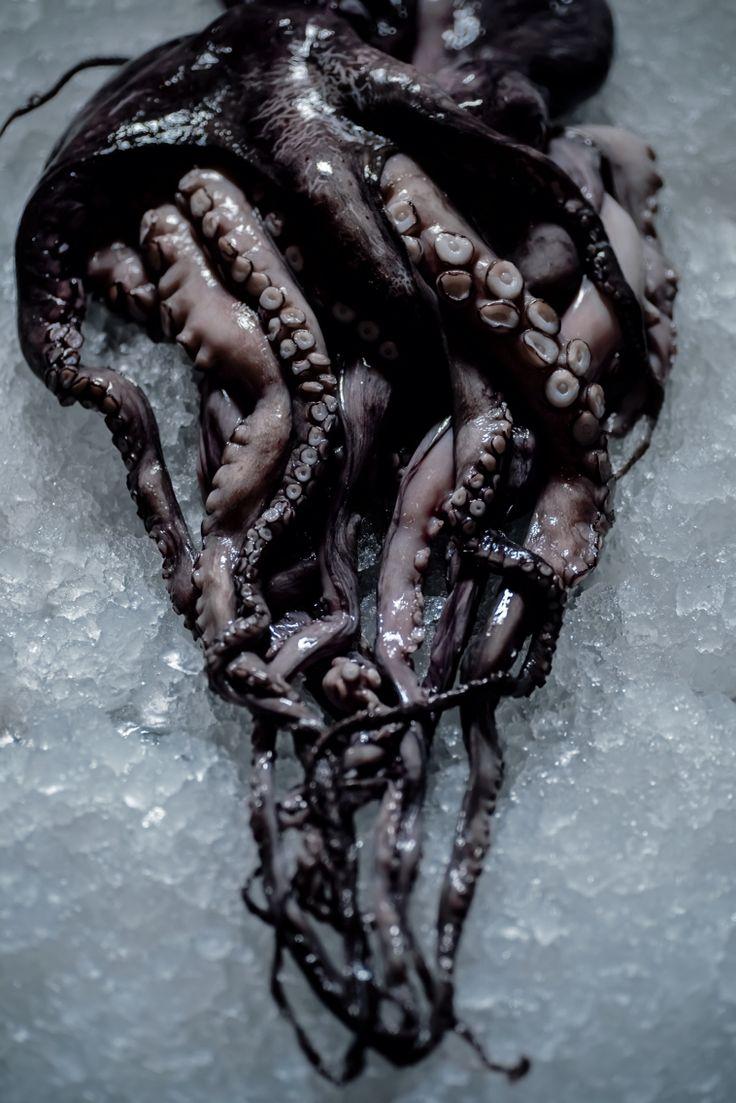 Octopuses   Roshianu&moloko food photography   Pinterest   Octopus