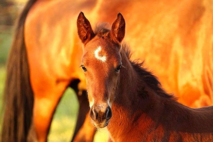 Somebeachsomewhere - Aston Villa Standardbred Broodmare Foal Harness Racing Vicbred By Nikkita Ross