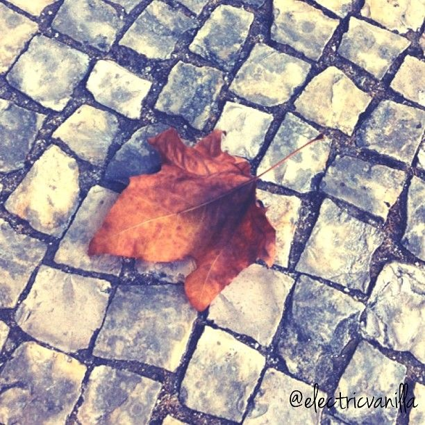autumn - http://electricvanilla.net/