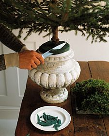 How to Trim a Tree - How to pot a fresh christmas tree in an urn from Martha Stewart