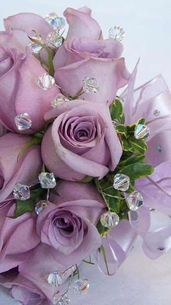 lavender roses                                                                                                                                                      More
