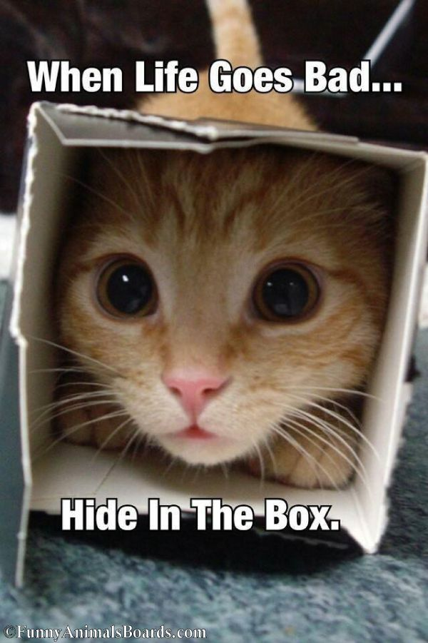 Life Goes Bad... hide in a box!